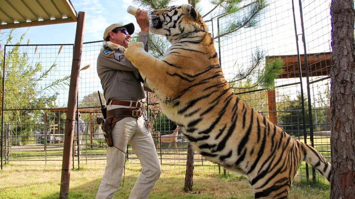 un tigre se tenant sur deux pattes au-dessus d'un homme